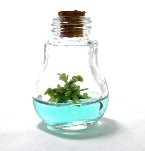Mini Plant for Desk