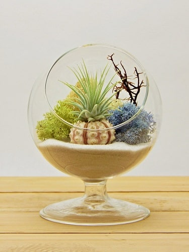 Air Plant Room Decor