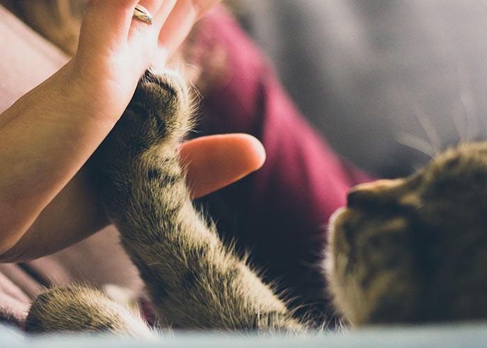 cat high five - cat nose fact