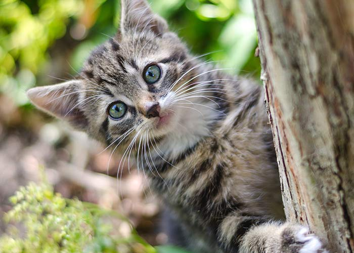 tabby cat hiding behind tree trunk image- fact about salt water