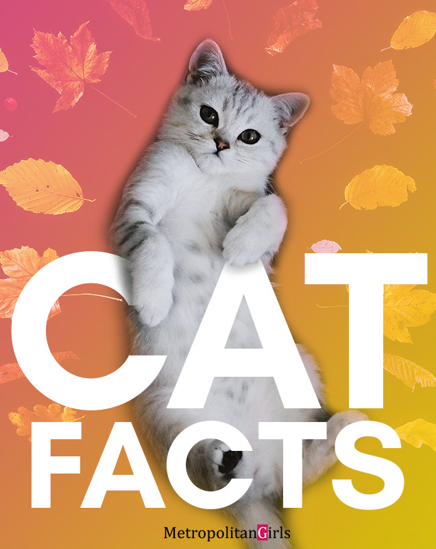 facts about cat - here are some interesting tidbits about the biggest star of the internet