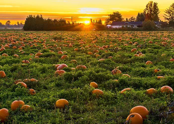 visit a local pumpkin patch - cheap fall date ideas