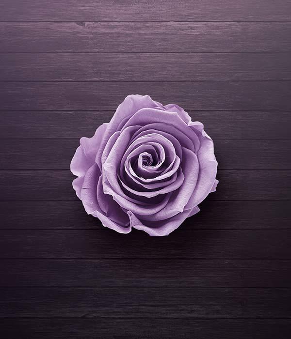 purple rose petal ideas for free date