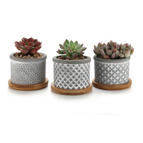 Cement Succulent Planter Pot with Bamboo Tray
