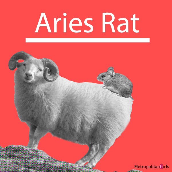 Featured image for Aries Rat overview article. This articles gives an overview on the personality, traits, love, career of the men, women, and children of the Aries-rat sign.