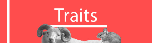 The traits and personality of Aries-rat