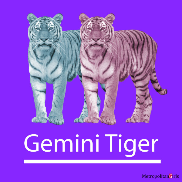 Gemini Tiger Personality, Traits, Flaws, Career, Love