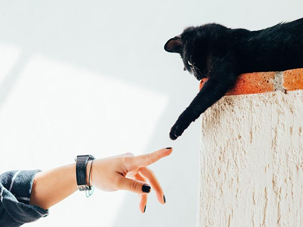 what is it like to date a cat person