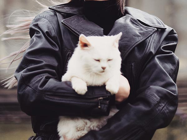 before cat owner things to know