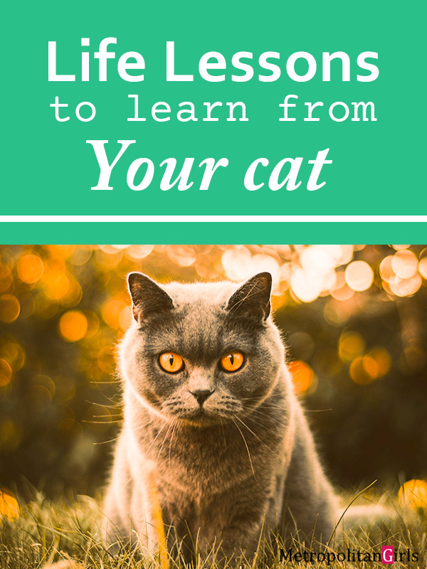 13 Life Lessons to Learn from Your Cat
