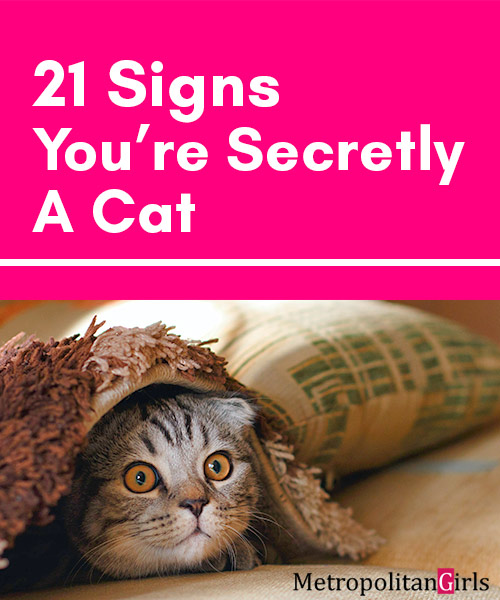 21 Signs You're A Cat Stuck in a Human Body