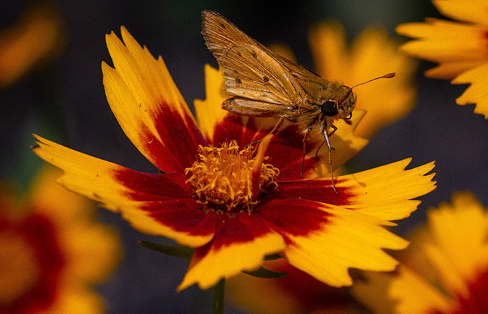 backyard dating - hunt for bugs