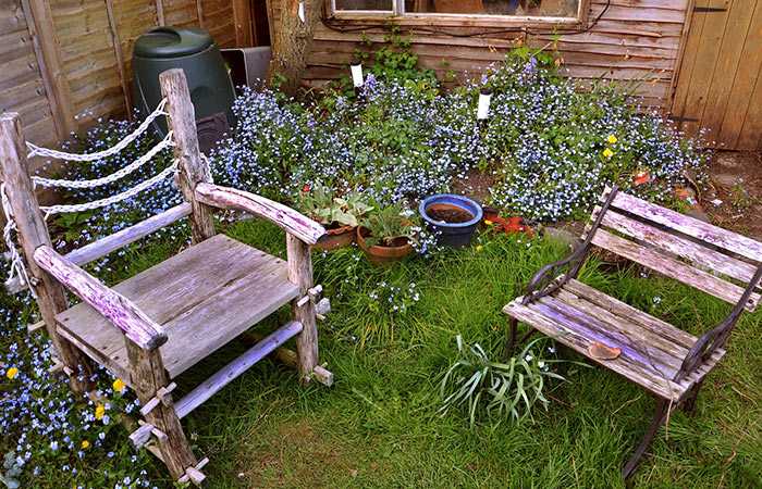 unique backyard date idea - grow a meadow