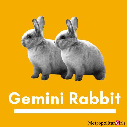 gemini rabbit combined zodiac sign