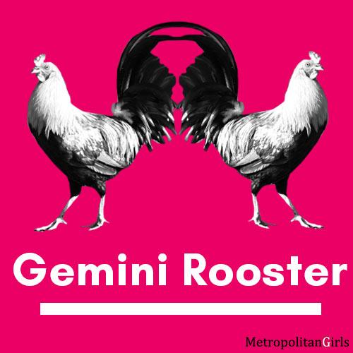 gemini rooster