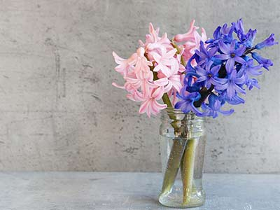 Hyacinth (Flower)