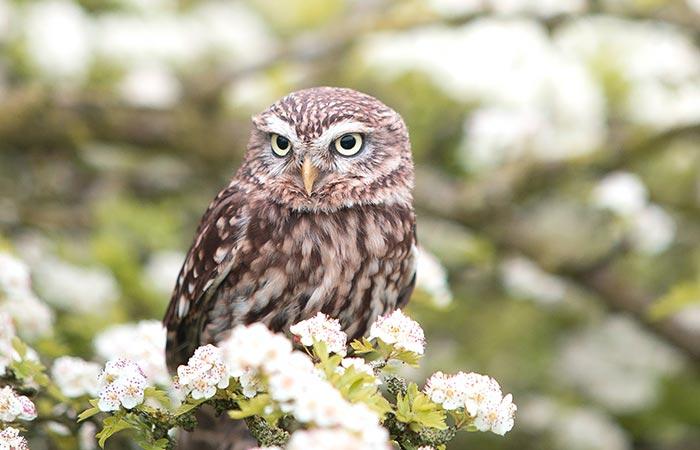 owl spiritual animal aries
